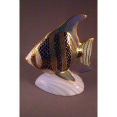 Royal Crown Derby Tropical Fish - Angel Fish Paperweight